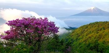 つつじと富士山